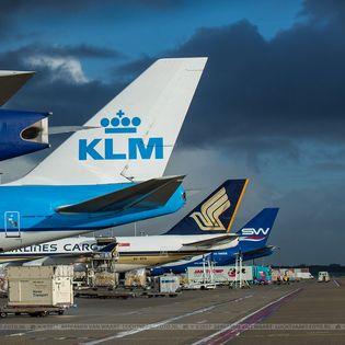 Luchthaven Schiphol beschikt niet over een natuurvergunning, maakte milieuorganisatie Mobilisation for the Environment (MOB) eerder deze week bekend.