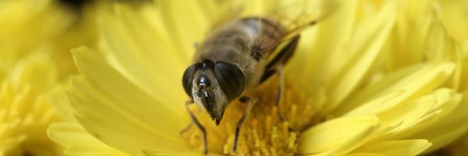 Bijen in de openbare ruimte