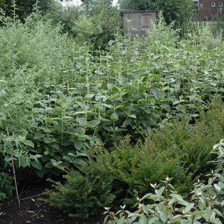 Met slimme aanpassingen van planten en samenstelling van groenensembles draagt MyEarth bij aan een gezonde leefomgeving. Dit zorgt voor meer verduurzaming.