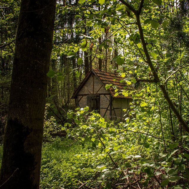 Huizen binnen een straal van zeven kilometer van natuur hebben een hogere waarde. Natuur blijkt in het onderzoek van Michiel Daams een grote rol te spelen.