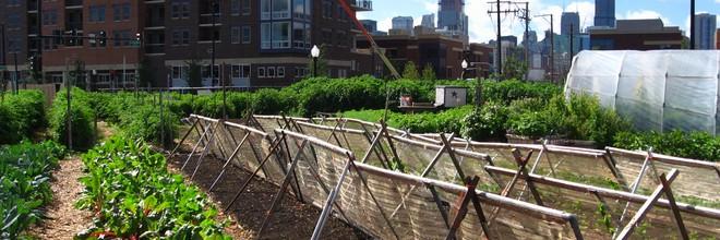 De onderste vijf verdiepingen van De Schilde worden geschikt gemaakt voor bedrijven en startups die zich bezighouden met stadslandbouw en innovatie.