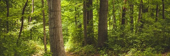 Bossen hebben meer invloed op het regionale weer en klimaat dan werd gedacht. Dit concluderen onderzoekers van o.a. het KNMI op basis van satellietgegevens.
