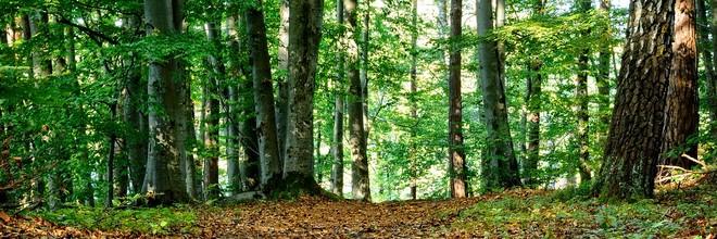 De Nederlandse hout- en bossector wil de komende dertig jaar 100.000 hectare extra bos creëeren. Het plan moet bijdragen aan de klimaatdoelen gesteld in het Energieakkoord. De nieuwe bosaanplant gaat ruim drie miljard euro kosten en beslaat een gebied groter dan de Veluwe.